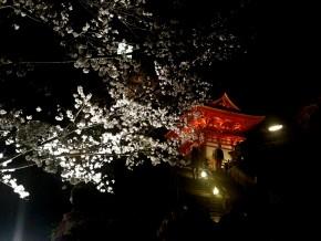 清水寺夜の特別拝観1
