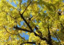 「黄色もきれいです」